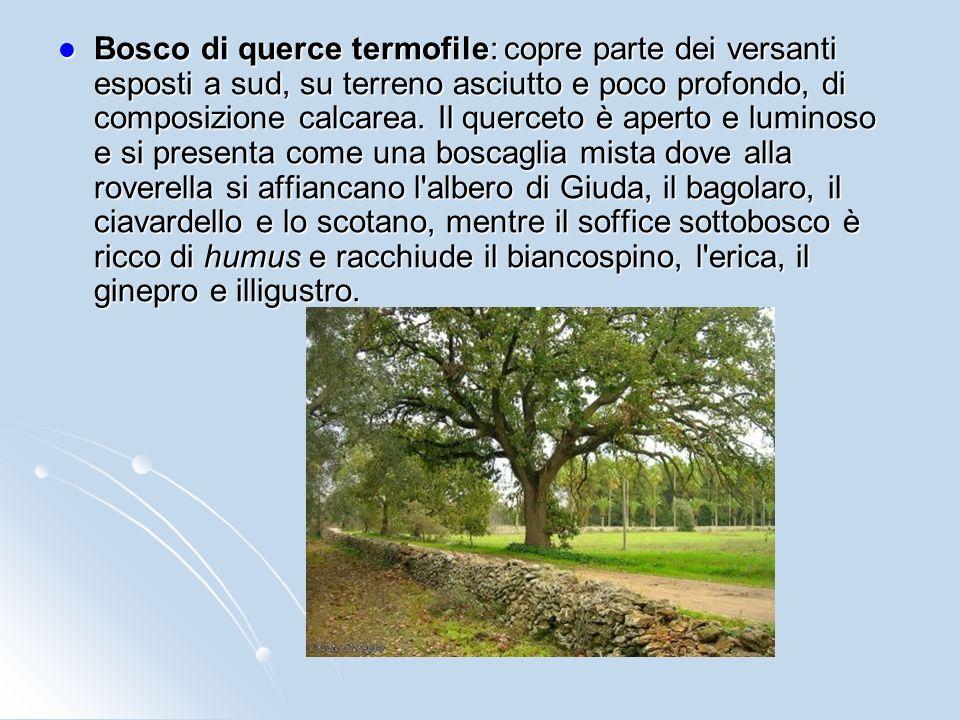 Bosco di querce termofile: copre parte dei versanti esposti a sud, su terreno asciutto e poco profondo, di composizione calcarea.