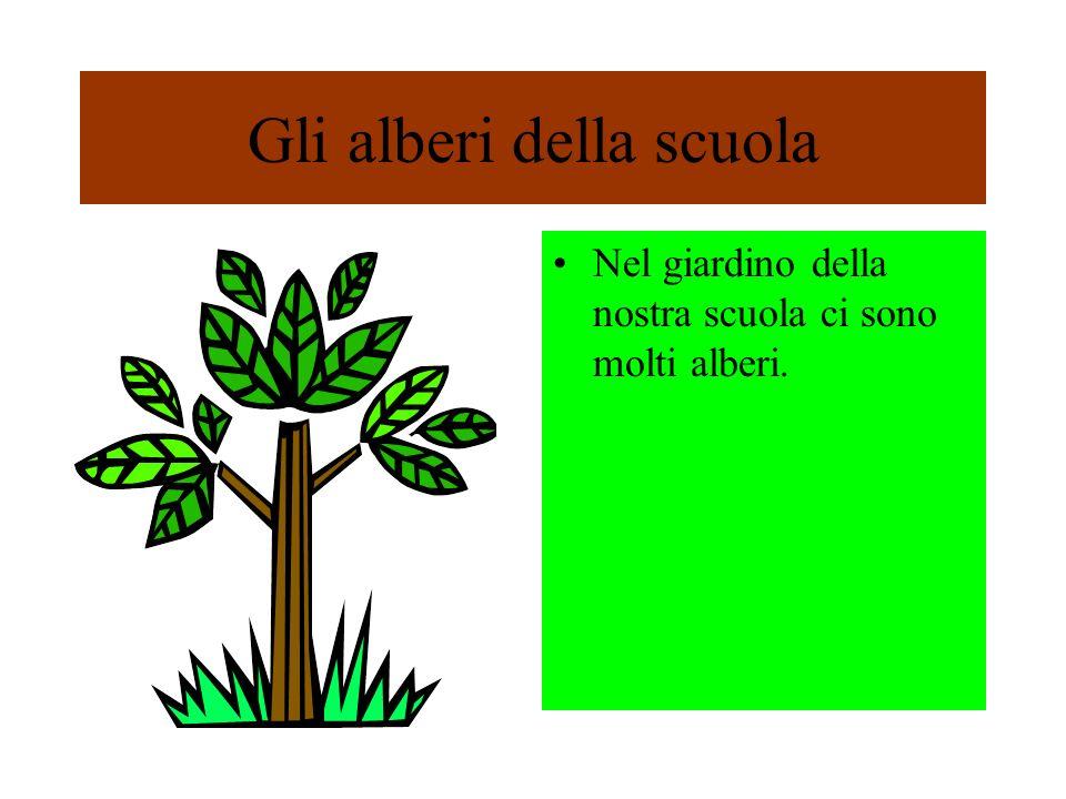 Gli alberi della scuola