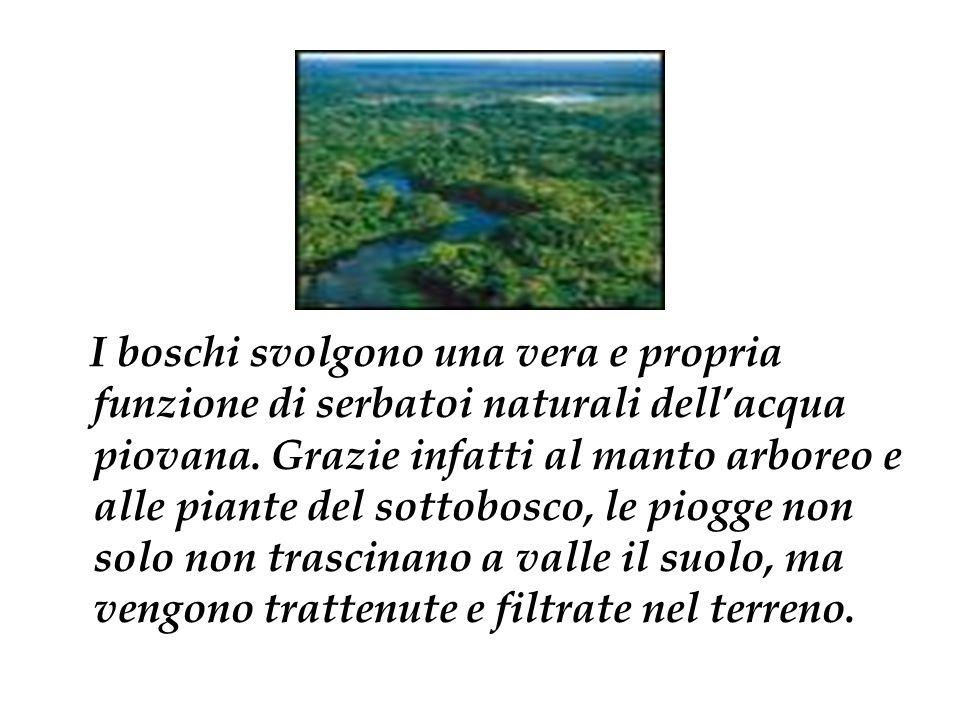 I boschi svolgono una vera e propria funzione di serbatoi naturali dell'acqua piovana.