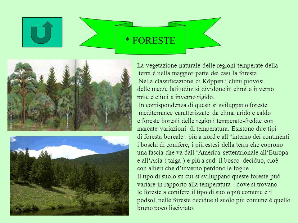 * FORESTE La vegetazione naturale delle regioni temperate della