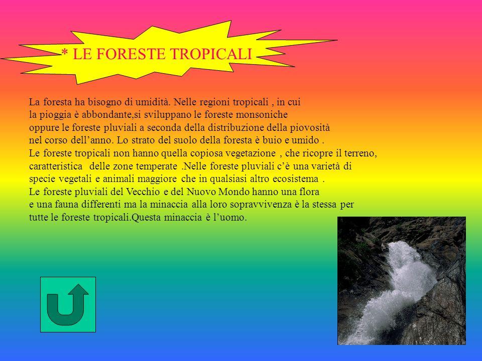 * LE FORESTE TROPICALI La foresta ha bisogno di umidità. Nelle regioni tropicali , in cui.