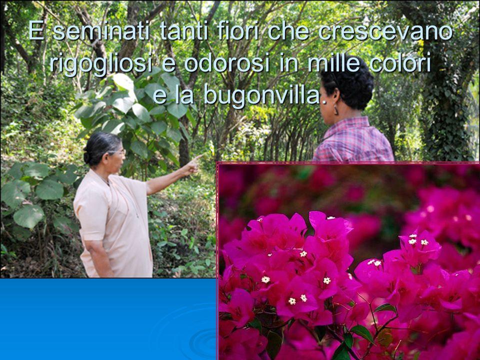E seminati tanti fiori che crescevano rigogliosi e odorosi in mille colori e la bugonvilla.