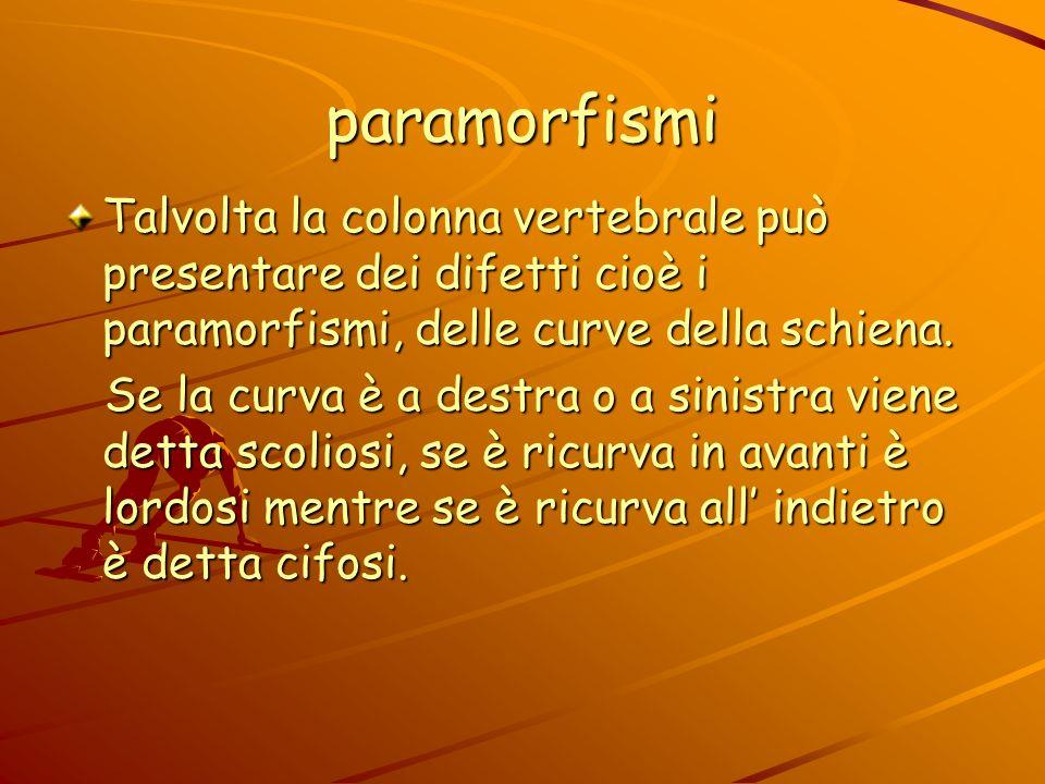 paramorfismi Talvolta la colonna vertebrale può presentare dei difetti cioè i paramorfismi, delle curve della schiena.