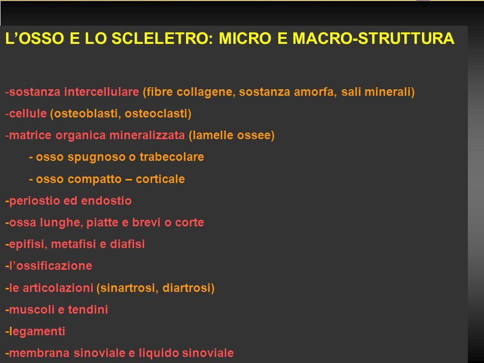 L'OSSO E LO SCLELETRO: MICRO E MACRO-STRUTTURA