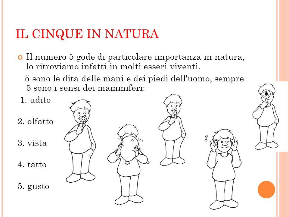 IL CINQUE IN NATURA Il numero 5 gode di particolare importanza in natura, lo ritroviamo infatti in molti esseri viventi.