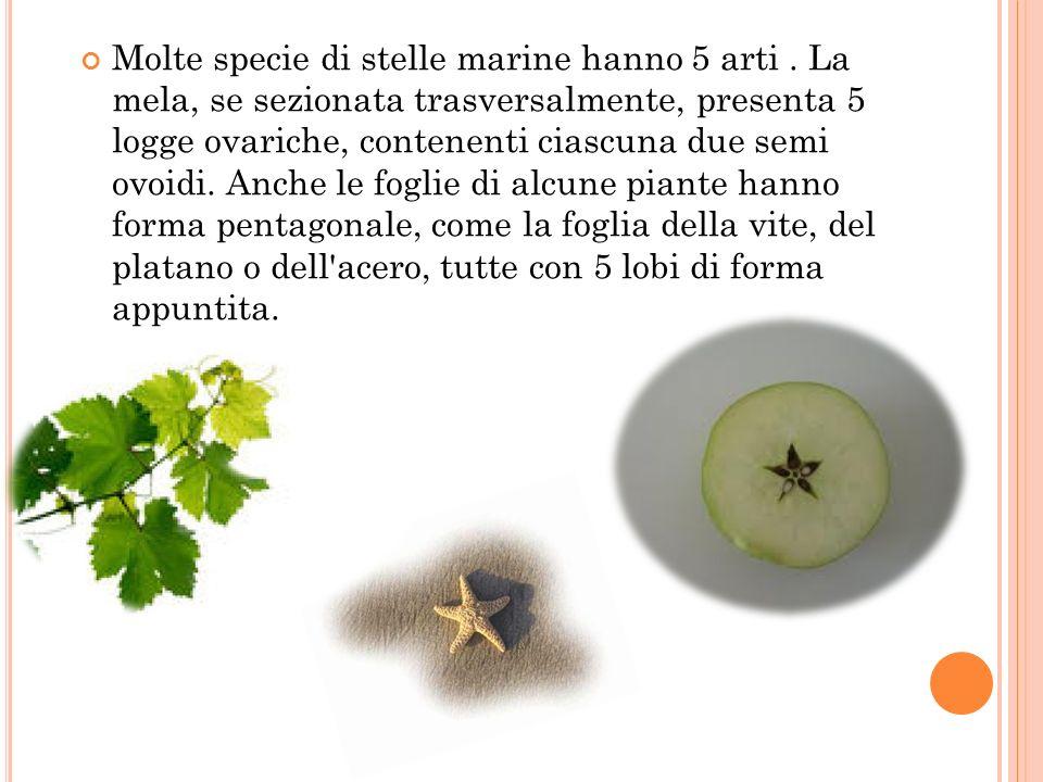 Molte specie di stelle marine hanno 5 arti