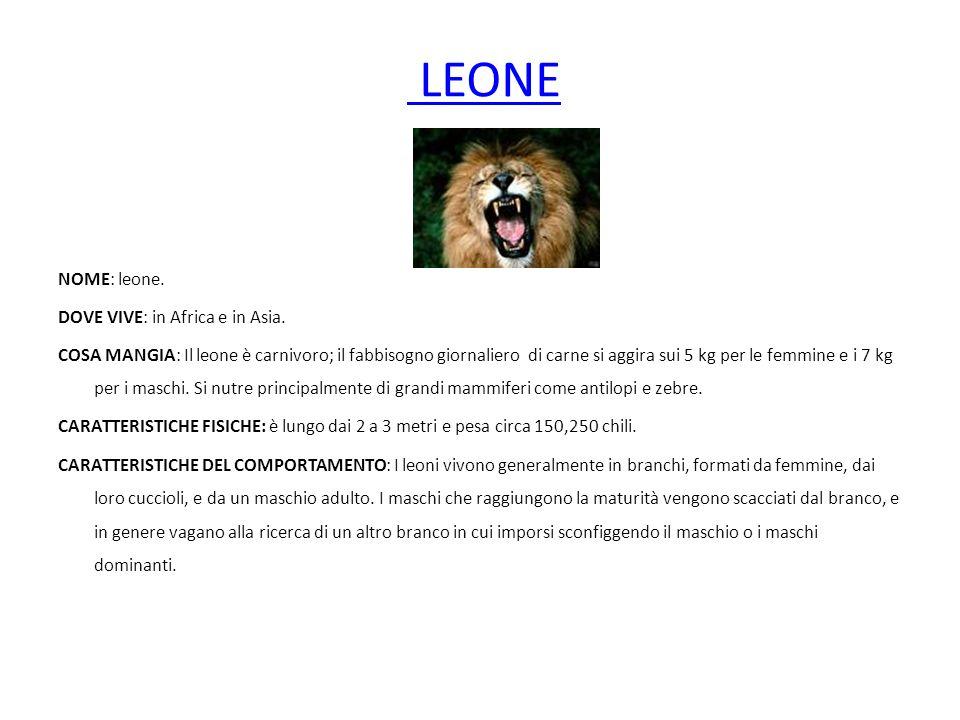 LEONE NOME: leone. DOVE VIVE: in Africa e in Asia.