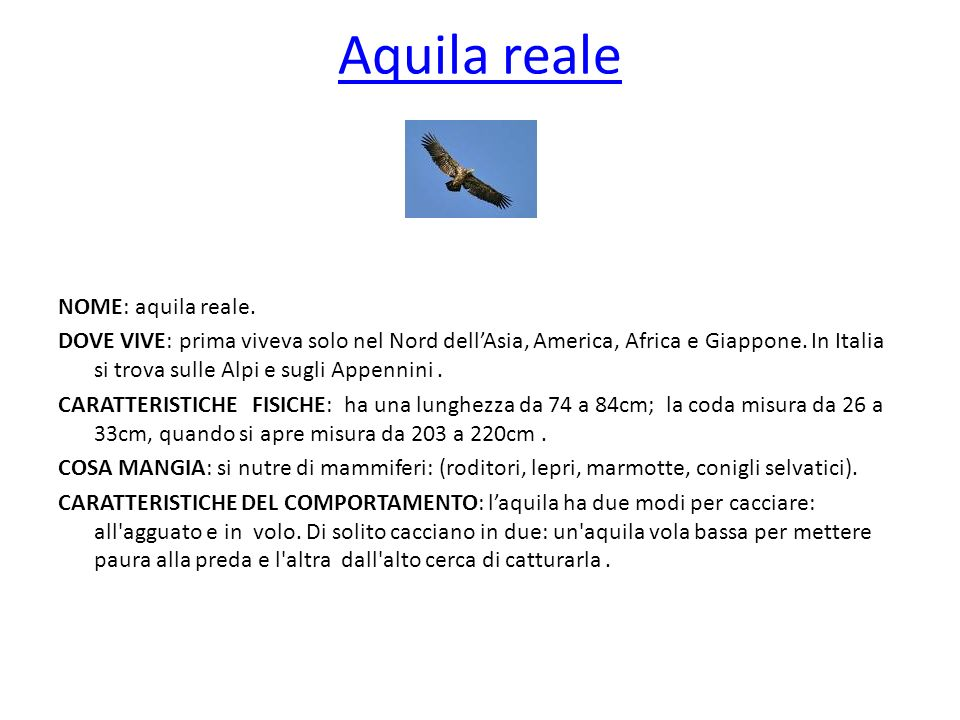 Aquila reale NOME: aquila reale.
