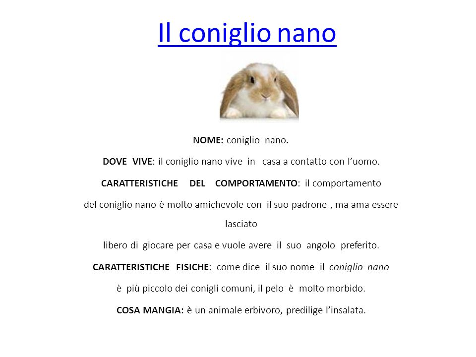 Il coniglio nano NOME: coniglio nano.