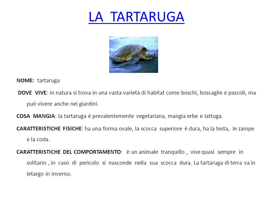 LA TARTARUGA NOME: tartaruga