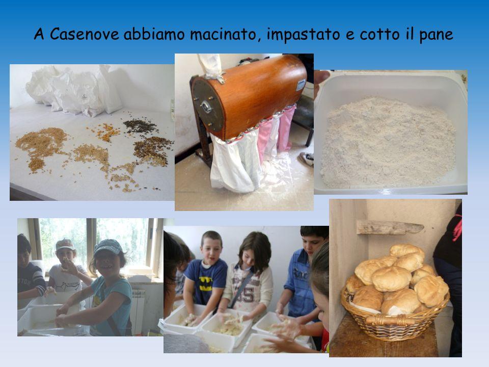 A Casenove abbiamo macinato, impastato e cotto il pane