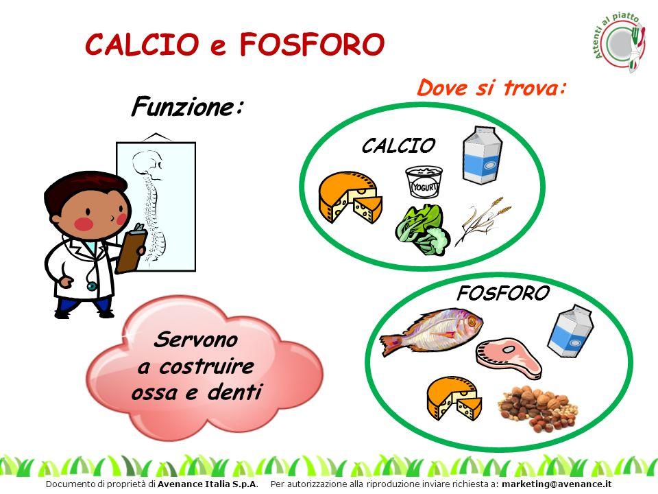 CALCIO e FOSFORO Funzione: Dove si trova: Servono a costruire