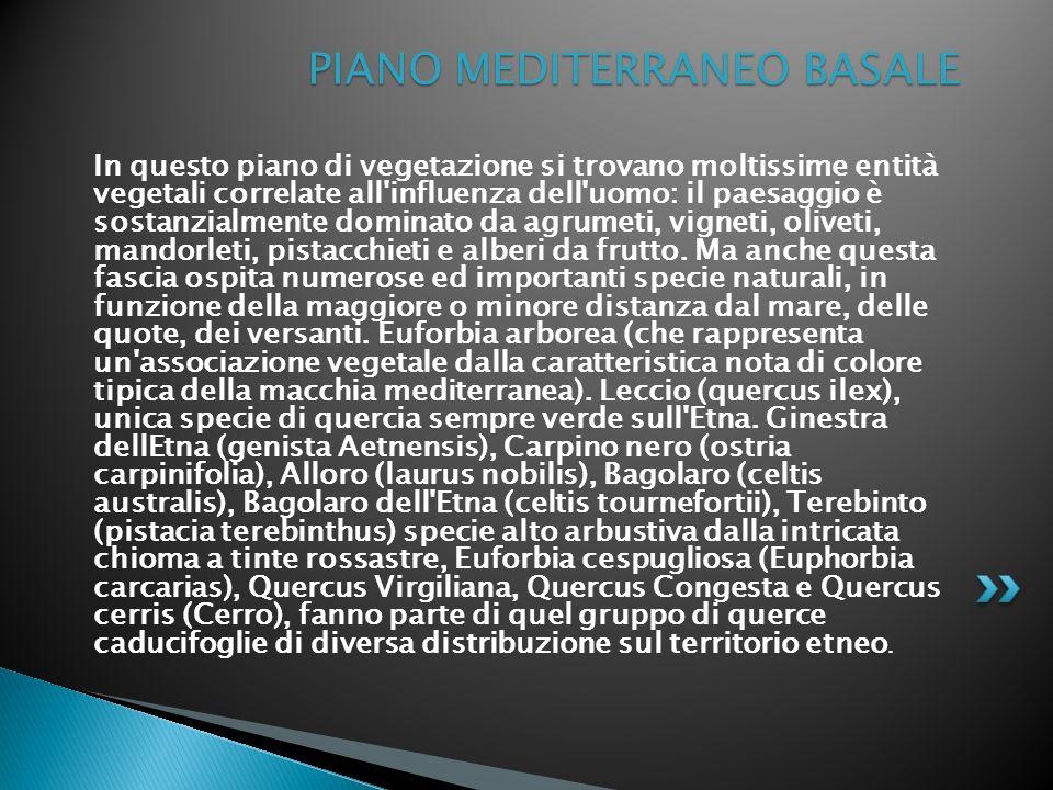 PIANO MEDITERRANEO BASALE