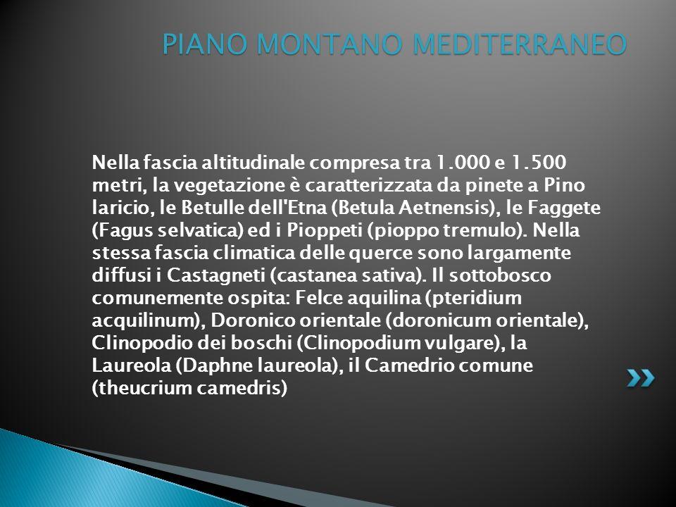 PIANO MONTANO MEDITERRANEO