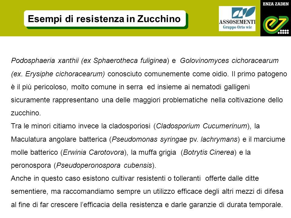 Esempi di resistenza in Zucchino