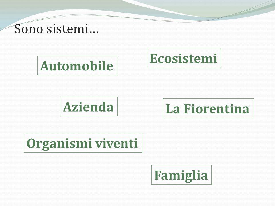 Sono sistemi… Ecosistemi Automobile Azienda La Fiorentina