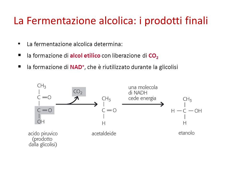 La Fermentazione alcolica: i prodotti finali