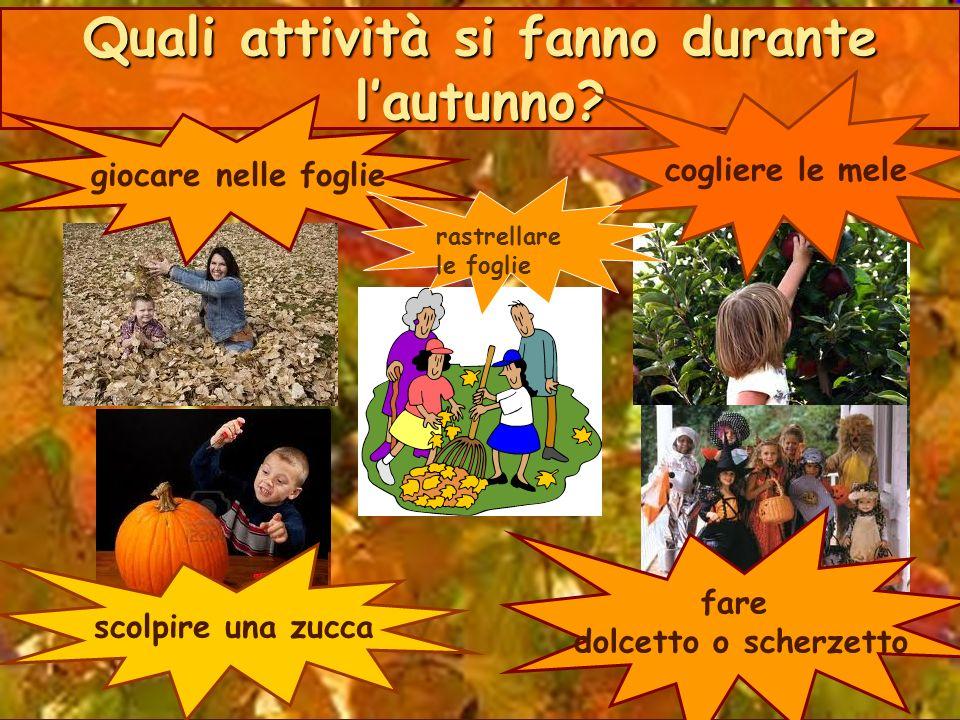 Quali attività si fanno durante l'autunno