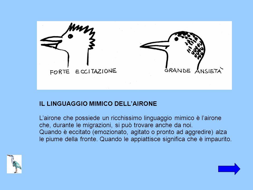 IL LINGUAGGIO MIMICO DELL'AIRONE