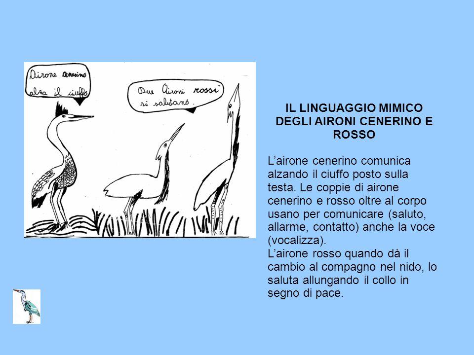 IL LINGUAGGIO MIMICO DEGLI AIRONI CENERINO E ROSSO
