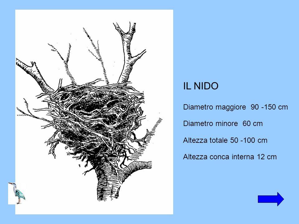 IL NIDO Diametro maggiore 90 -150 cm Diametro minore 60 cm