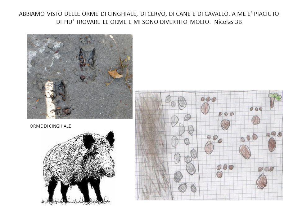ABBIAMO VISTO DELLE ORME DI CINGHIALE, DI CERVO, DI CANE E DI CAVALLO