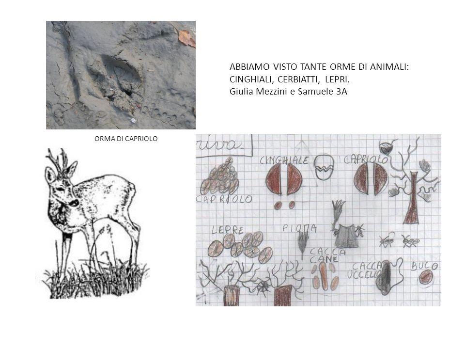 ABBIAMO VISTO TANTE ORME DI ANIMALI: CINGHIALI, CERBIATTI, LEPRI