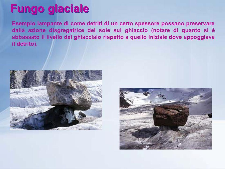 Fungo glaciale