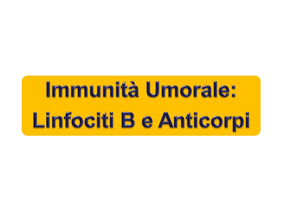 Linfociti B e Anticorpi