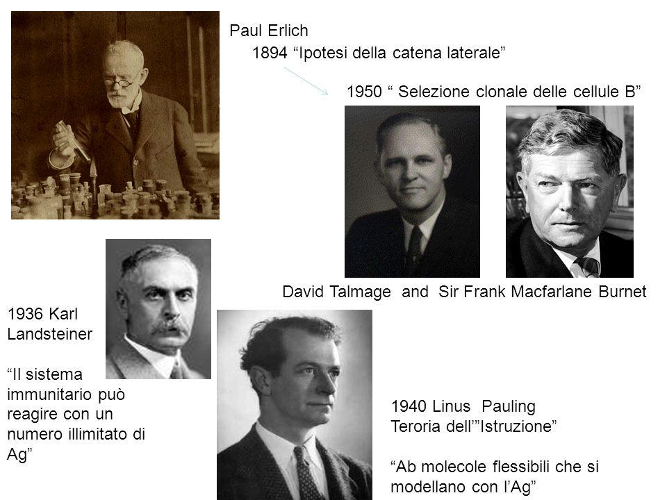 Paul Erlich 1894 Ipotesi della catena laterale 1950 Selezione clonale delle cellule B David Talmage and Sir Frank Macfarlane Burnet.