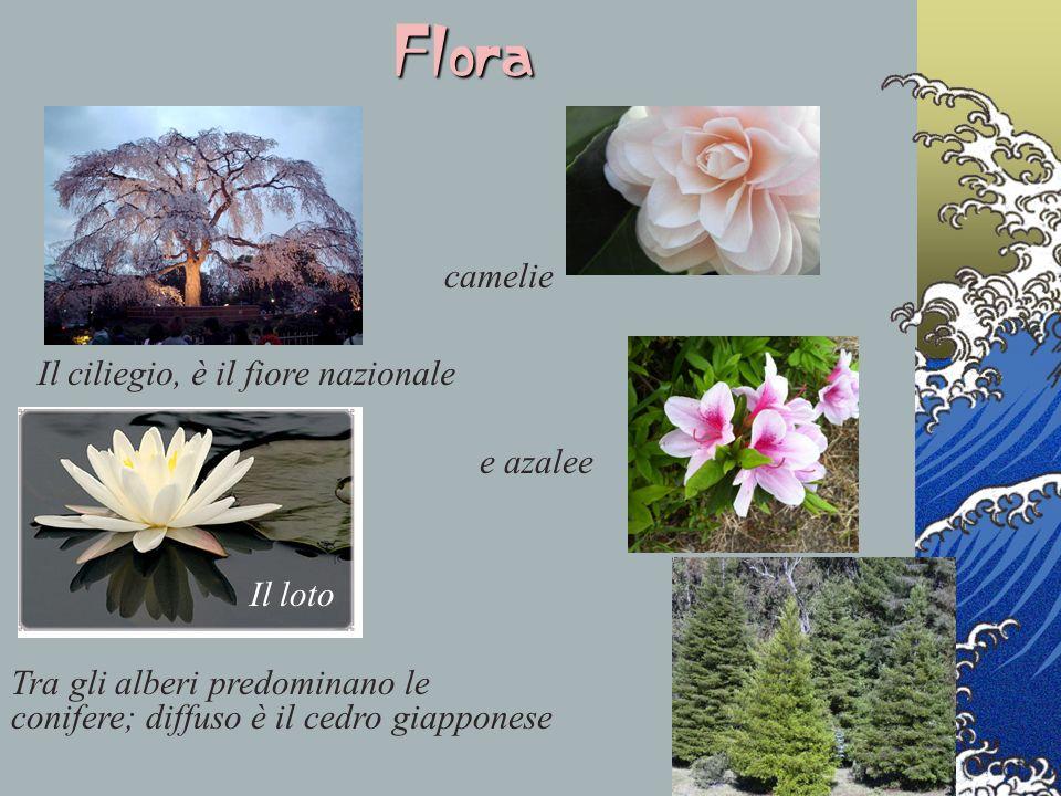 Il ciliegio, è il fiore nazionale