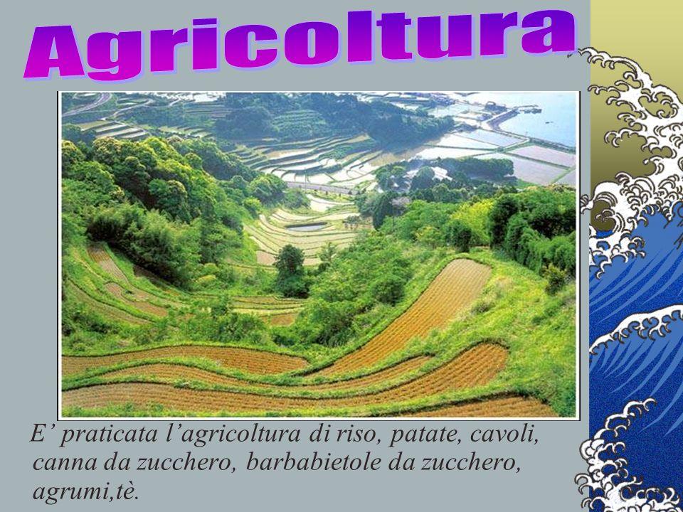 Agricoltura E' praticata l'agricoltura di riso, patate, cavoli, canna da zucchero, barbabietole da zucchero, agrumi,tè.