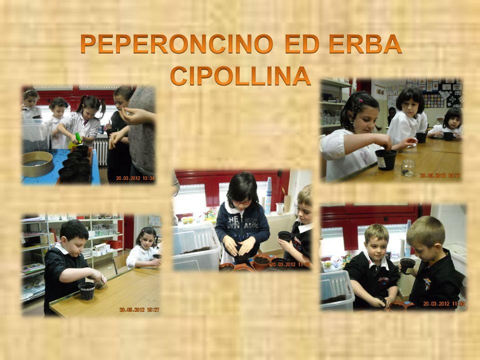 PEPERONCINO ED ERBA CIPOLLINA