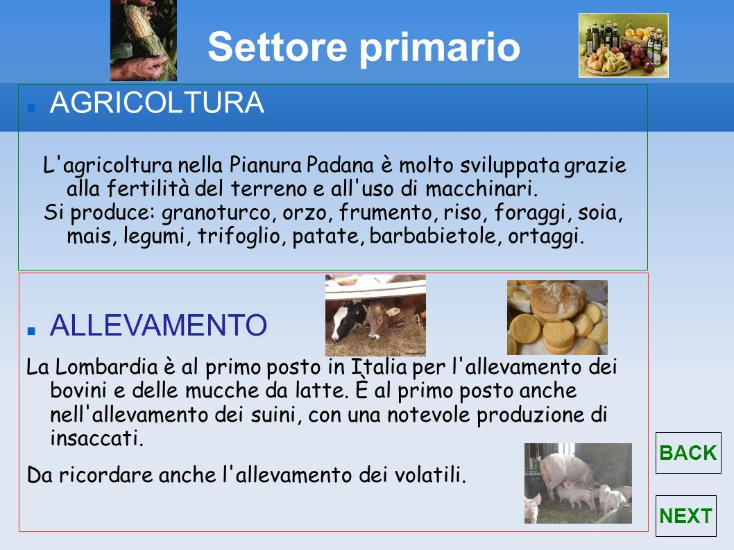 Settore primario AGRICOLTURA ALLEVAMENTO
