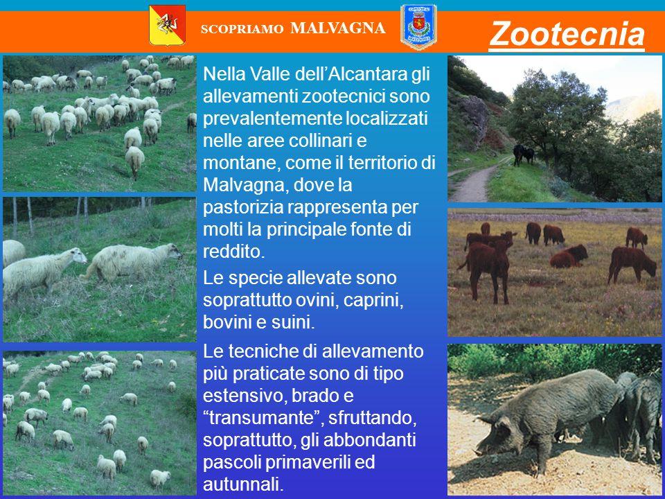 SCOPRIAMO MALVAGNA Zootecnia.