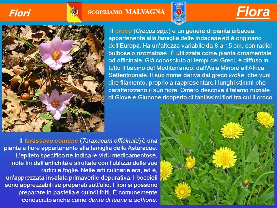 Flora Fiori. SCOPRIAMO MALVAGNA.