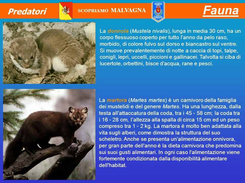 Fauna Predatori. SCOPRIAMO MALVAGNA.