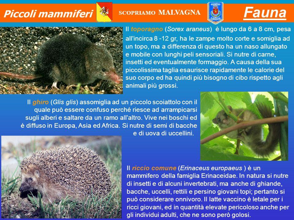 Fauna Piccoli mammiferi