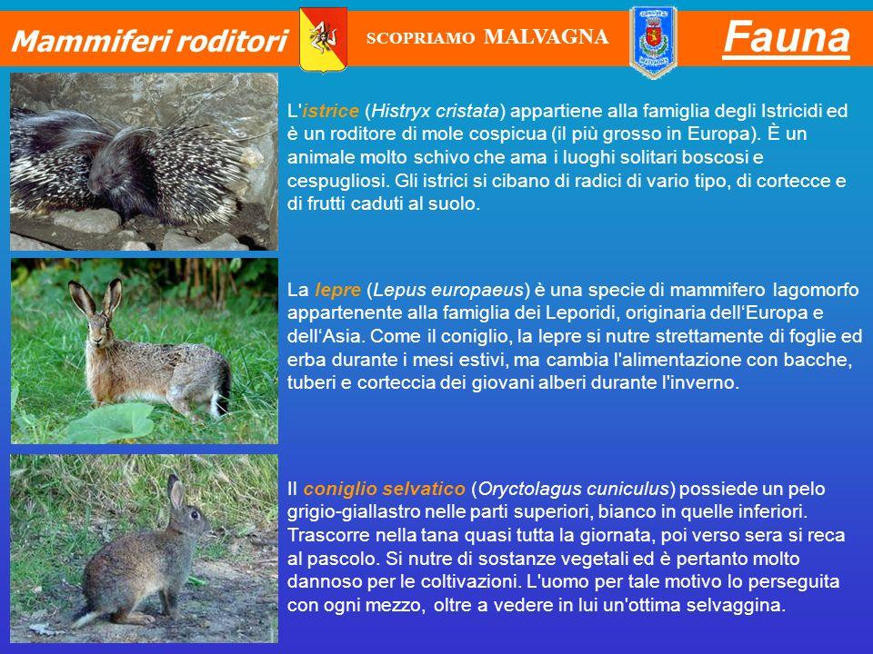 Fauna Mammiferi roditori
