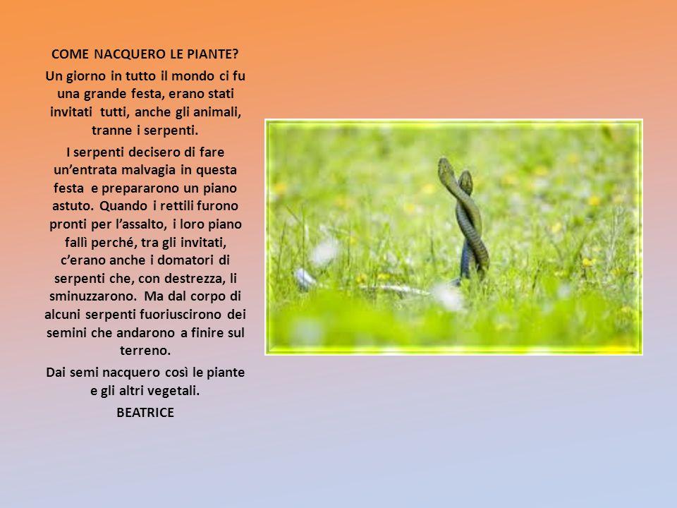 Dai semi nacquero così le piante e gli altri vegetali.