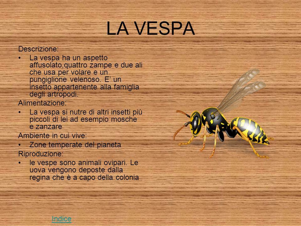 LA VESPA Descrizione: