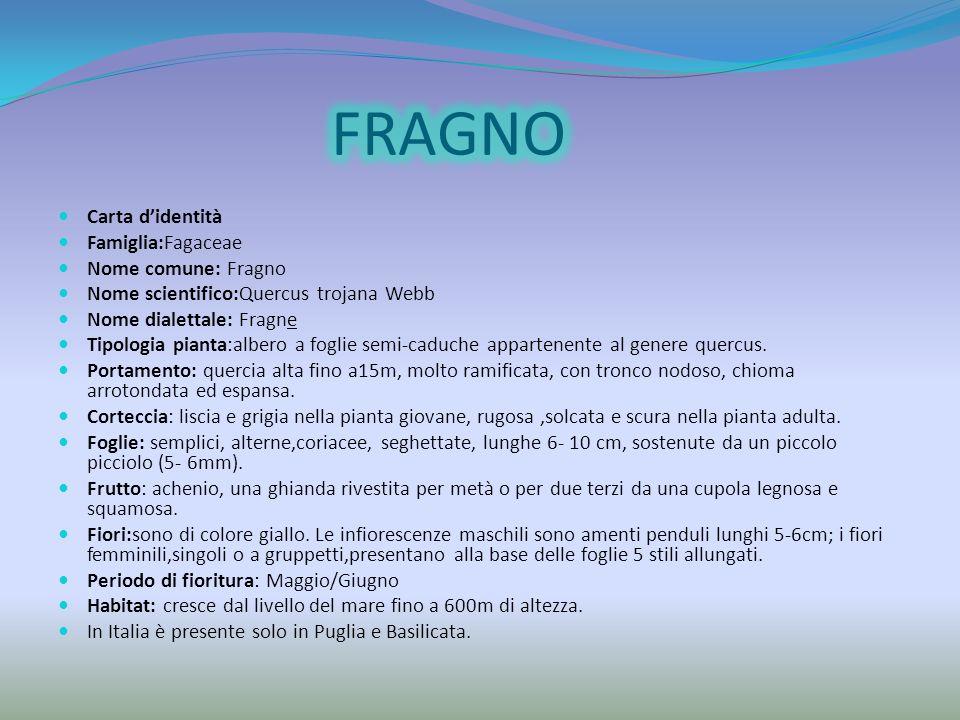 FRAGNO Carta d'identità Famiglia:Fagaceae Nome comune: Fragno