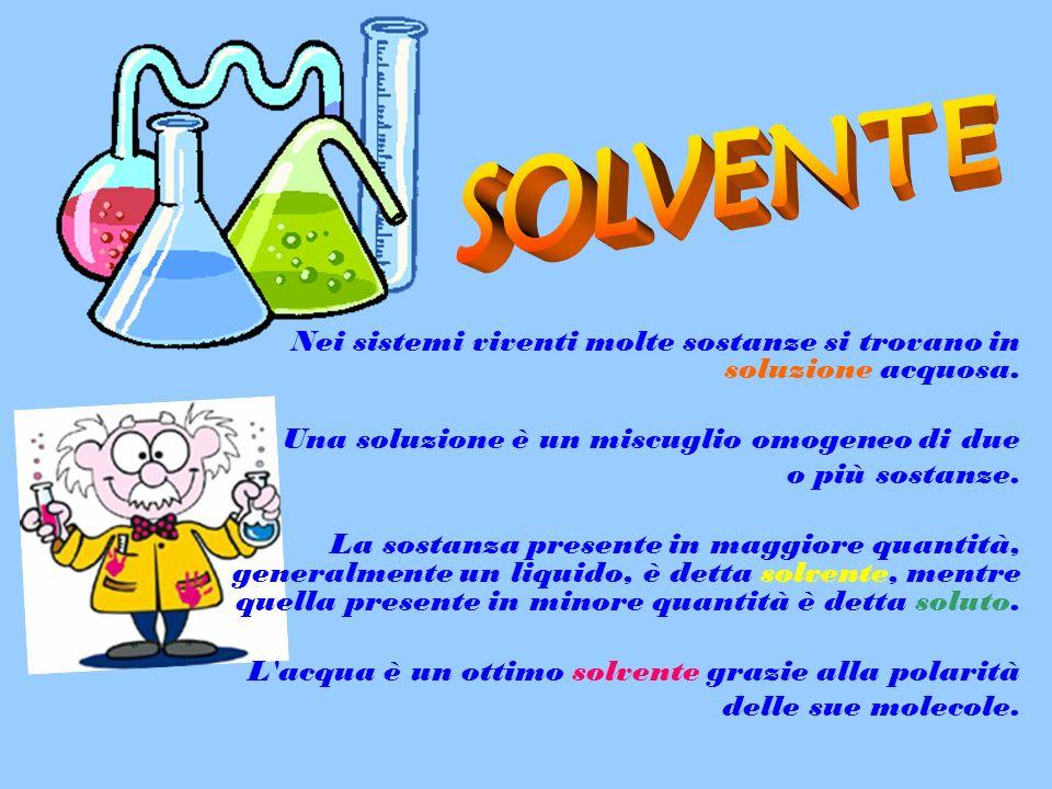 SOLVENTE Una soluzione è un miscuglio omogeneo di due o più sostanze.