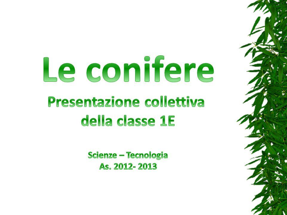 Presentazione collettiva