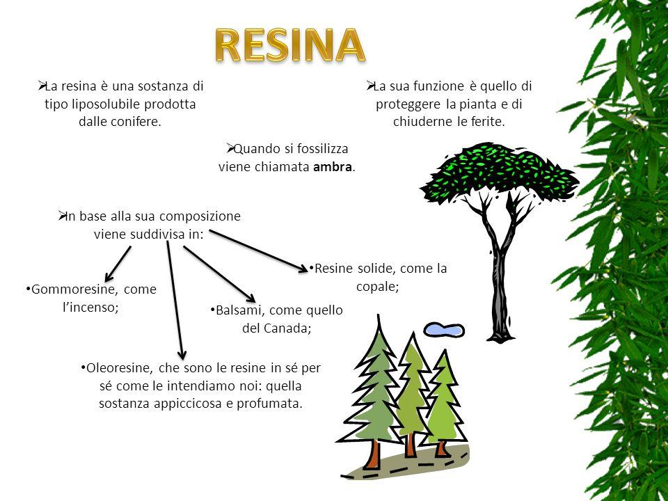 RESINA La resina è una sostanza di tipo liposolubile prodotta dalle conifere.