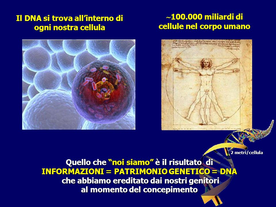 Il DNA si trova all'interno di ogni nostra cellula