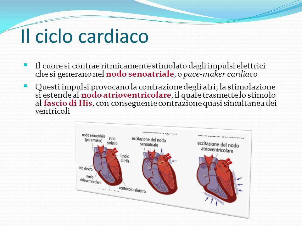 Il ciclo cardiaco Il cuore si contrae ritmicamente stimolato dagli impulsi elettrici che si generano nel nodo senoatriale, o pace-maker cardiaco.