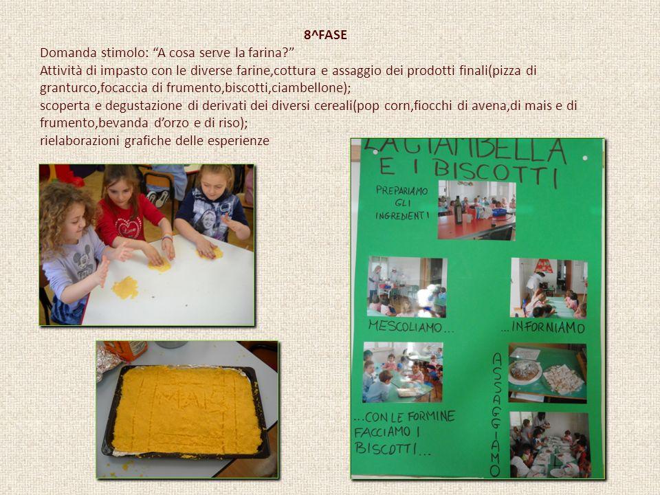 8^FASE Domanda stimolo: A cosa serve la farina