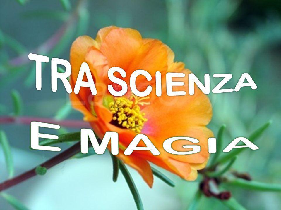 TRA SCIENZA E MAGIA