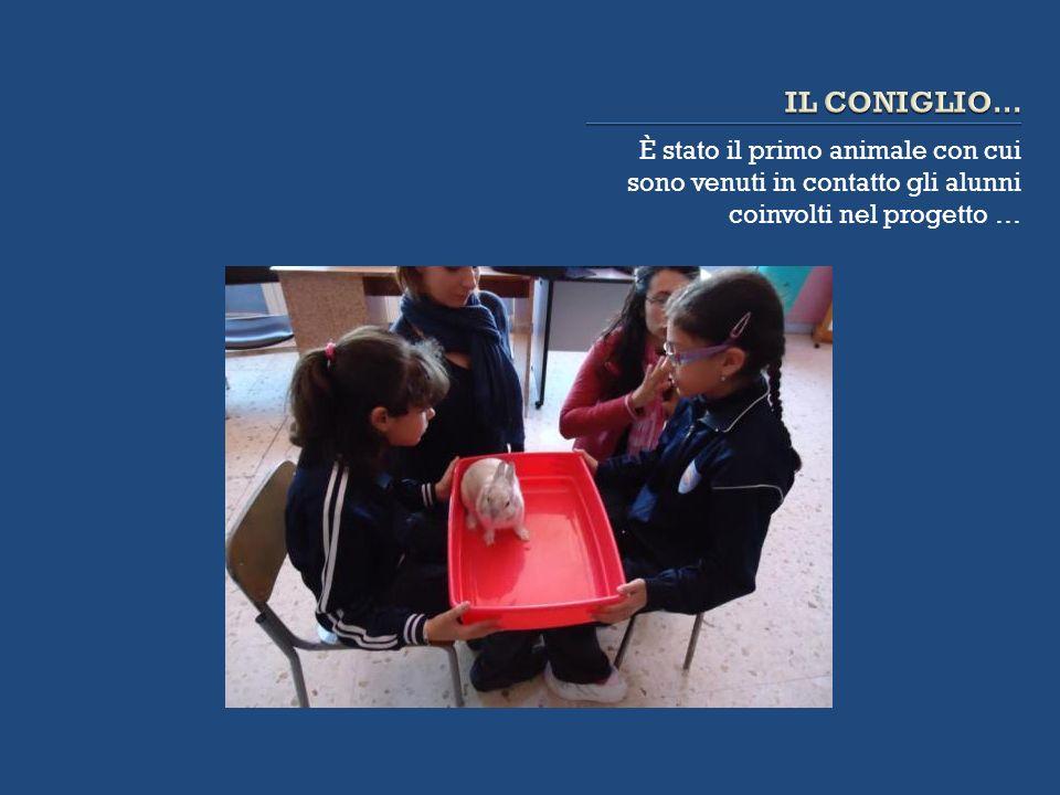 IL CONIGLIO…È stato il primo animale con cui sono venuti in contatto gli alunni coinvolti nel progetto …